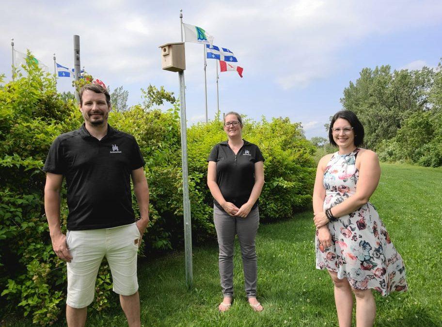 Cinquante nichoirs installés à Trois-Rivières pour préserver l'hirondelle bicolore